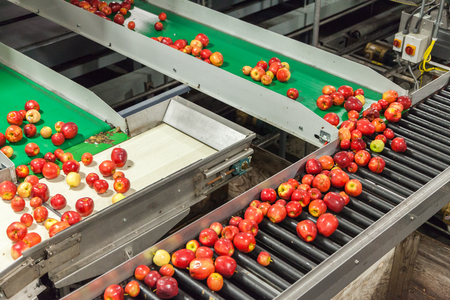Clean and fresh gala apples on a conveyor belt in a fruit packaging warehouse for presize Stock Photo