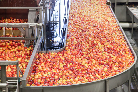 Clean and fresh gala apples on a conveyor belt in a fruit packaging warehouse for presize