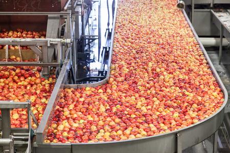 Manzanas gala limpias y frescas en una cinta transportadora en un almacén de envasado de frutas para presize