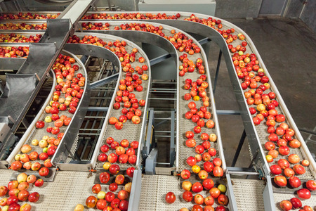 Clean and fresh gala apples on a conveyor belt in a fruit packaging warehouse for presize Stockfoto