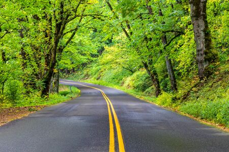 A shady stretch of winding road along the Columbia River Gorge Scenic Byway Highway in Oregon, USA