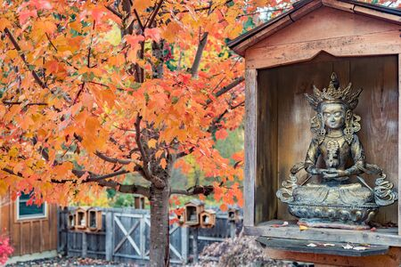 Buddha statue. Green Tara in wooden enclosure with autumn scene and orange red maple tree Reklamní fotografie