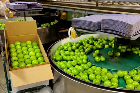 Fresh, green Granny Smith apples in a fruit packaging warehouse Reklamní fotografie