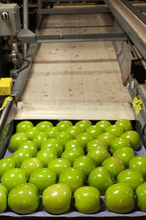 Fresh, green apples in a fruit packaging warehouse
