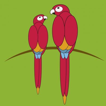 birds of paradise: paradise birds Illustration