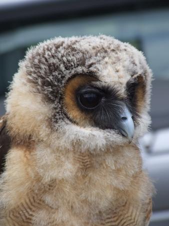 Dziecko sowa głowa w bliska