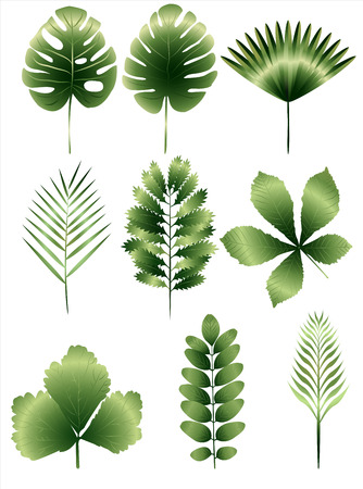 Set of nine different european and tropical leaves Çizim