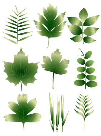 Set of nine different european leaves  イラスト・ベクター素材