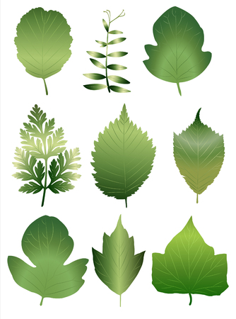 Set of nine different european leaves Ilustração