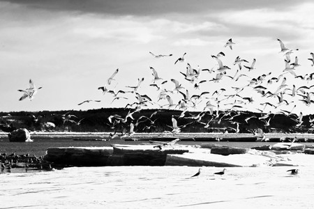 shot with motion and bird during a winter day photo