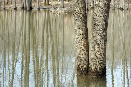 swamp with a tree in water Stock Photo - 4391887