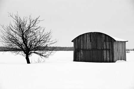 old structure and old tree during the winter