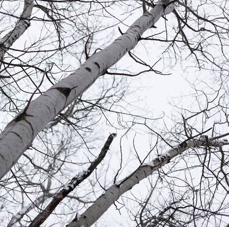 cloudy sky with tree photo
