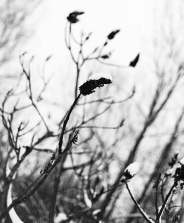 abstract shot of tree during winter photo