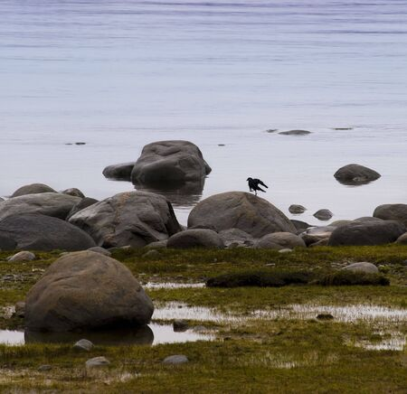 lonely bird: lonely bird dancing on a stone near the water Stock Photo