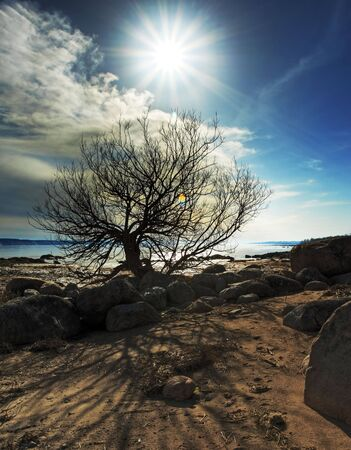 Beautiful scene landscape with sand, rock and a tree in the foreground  and water in the background. Blue sky with cloud. Controlled flare with sun star. Stock Photo - 6684882