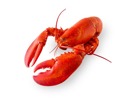 lobster isolated: Cooked and boiled red lobster isolated on a white background with added shade. Clipping path in the file. Stock Photo