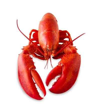 lobster: 레드 랍스터 추가 그늘과 흰색 배경에 고립.