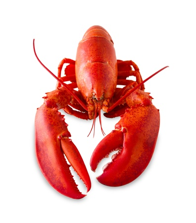 Red lobster isolated on a white background with added shade.