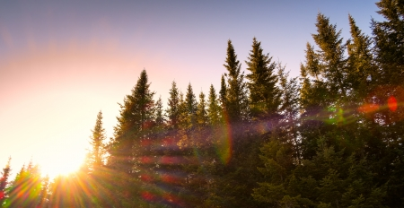 pinetree: Beautiful landscape with the sun behind the pine tree. Controled flare and sunray. Stock Photo