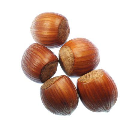 Hazelnuts photo