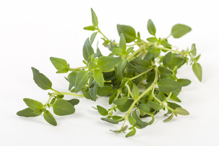 tomillo: Thyme - thyme bunch on a white background.