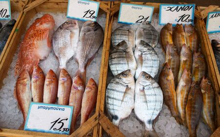 fishmonger: A display of fish at a Greek fishmongers.