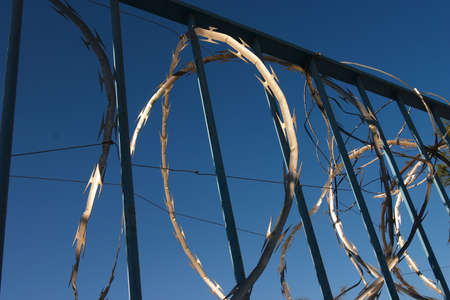 Razor wire and iron bars against a dark blue sky Stock Photo - 262010