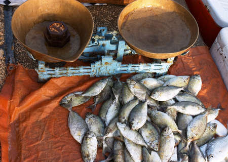 The morning's catch of shari (local name) beside a set of scales on Doha's Corniche, in Qatar. A small fish market operates there every morning. Stock Photo - 261991