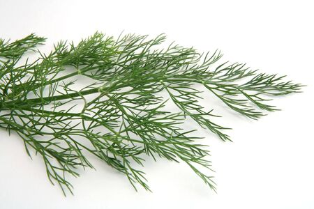 Fronds of dill weed