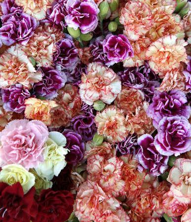 Carnation flowers photo