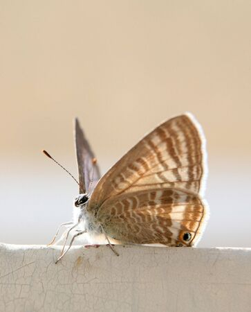 uncommon: An uncommon butterfly, backlit, sitting on a gate in Doha, Qatar.