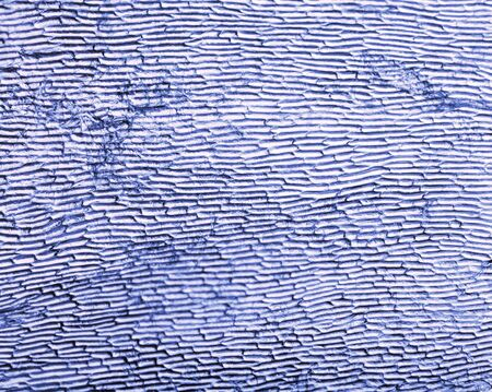 A photograph of the cells in an onion skin, with a blue tint applied (desaturate to restore original appearance).  photo