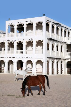 souq: Purebred Arabian horses in a paddock opposite the Emiri Diwan palace in central Doha. The ornate stables behind are part of the redeveloped Souq Waqif market area