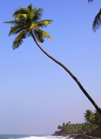 A coconut palm tree hangs out over the sea at a beach north of Varkala, Kerala, with a palm jungle and low red lateritic cliffs visible beyond. photo