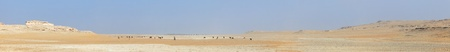 vanished: A herd of camels grazes on the bed of an ancient, long vanished, river in the Qatari desert at Al Nakhsh, near the Saudi Arabian border. The  Hofuf beds cap the hills to the left and the Dammam formation makes up those on the right.