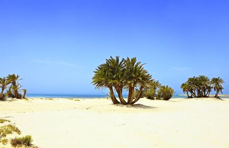 umm: Umm Bab beach in Qatar, Arabia, possibly the finest beach on the Arab emirate, but one that suffers from official neglect and nearby industrial development. The palms appear to be self-sown.
