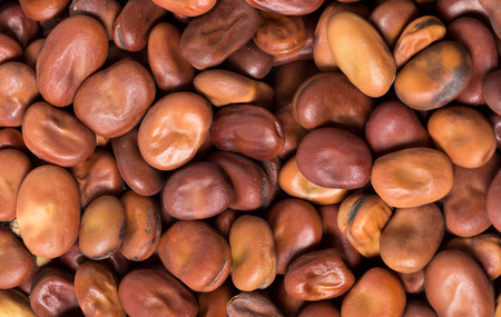 make a paste: Dried brown fava beans or broad beans, an important ingredient in Middle Eastern cooking, where they are used both for Egyptian foul meddames and to make a bean paste, among other things. Stock Photo
