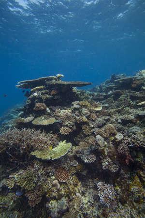 reef scape Stock Photo - 15802959