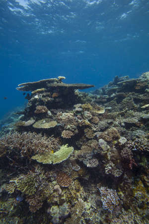 reef scape Stock Photo - 15802959