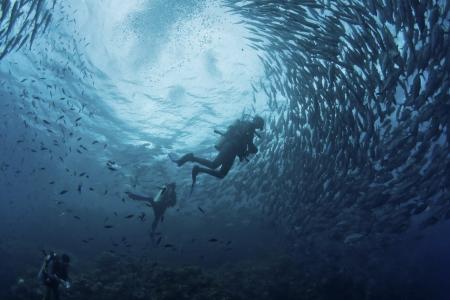 padi: fish mass and diver Stock Photo
