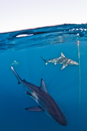 dappled: sharks in the light