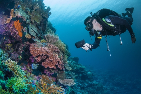 divers: Diver and colourful coral Stock Photo