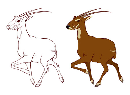 asia deer: Illustration of Saola - asian unicorn - is one of the world s rarest mammals