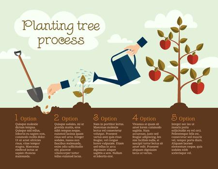 büyüme: Ağaç dikimi sürecinin Timeline İnfografik, düz tasarım Çizim