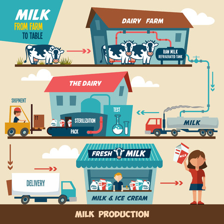 food drink industry: Stages of production and processing of milk from a dairy farm to table