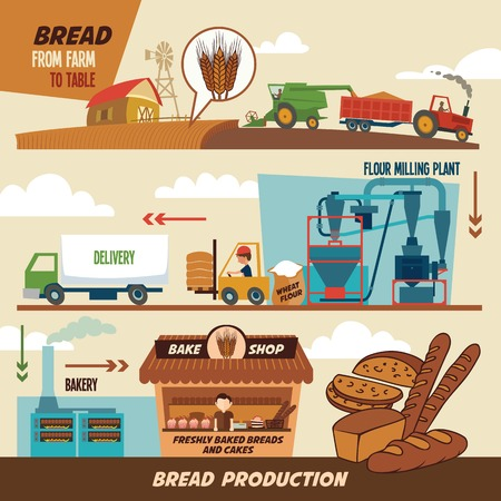 Stages of production of bread. From wheat harvest to freshly baked bread, from farm to table Vector