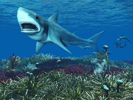 A great white shark swimming underwater with hammerhead sharks in the background. photo