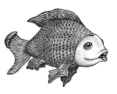 Ink drawing of a large carp with an enigmatic expression on her face.