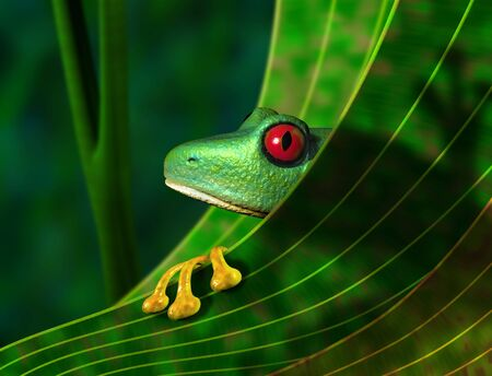 Illustration of an endangered red eyed tree frog peering from behind a leaf in the rainforest illustration